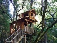 Amazing Treehouses 01