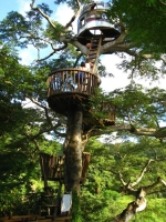 Amazing Treehouses 06