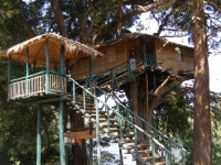 Amazing Treehouses 08