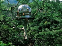 Amazing Treehouses 11