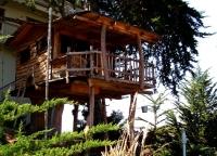 Amazing Treehouses 13