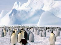 Beautiful Antarctica 19