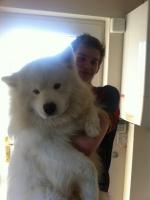 Big Dogs 01