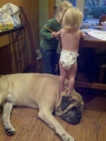 Big Dogs 02