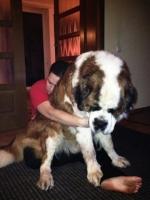 Big Dogs 05
