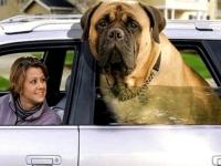 Big Dogs 06