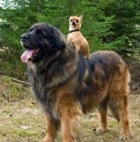 Big Dogs 07