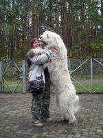 Big Dogs 09
