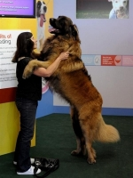 Big Dogs 11
