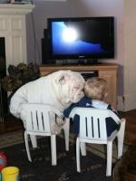 Big Dogs 12
