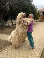 Big Dogs 13