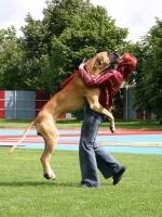 Big Dogs 14