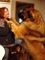 Big Dogs 15