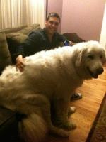 Big Dogs 16