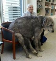 Big Dogs 18