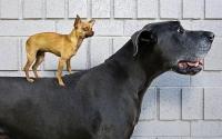 Big Dogs 25