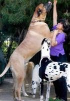 Big Dogs 26
