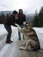 Big Dogs 27
