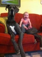 Big Dogs 29