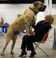 Big Dogs 30