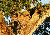 Camouflaged Owls 06