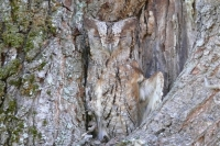 Camouflaged Owls 07