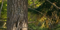 Camouflaged Owls 20