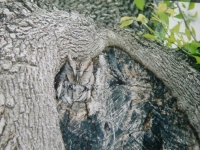 Camouflaged Owls 22