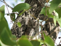 Camouflaged Owls 24