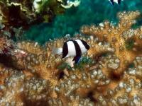 Diving In Chuuk 07