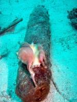 Diving In Chuuk 08