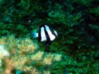 Diving In Chuuk 11