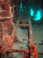 Diving In Chuuk 12