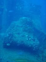 Diving In Chuuk 25