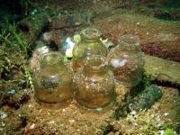 Diving In Chuuk 30