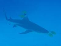 Diving In Chuuk 33