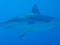 Diving In Chuuk 34