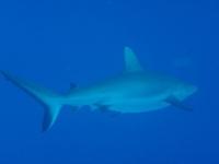 Diving In Chuuk 36