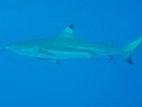 Diving In Chuuk 37