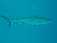 Diving In Chuuk 38