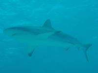 Diving In Chuuk 39