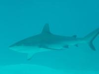 Diving In Chuuk 40