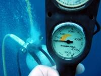 Diving In Chuuk 45