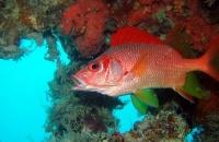 Diving Palau