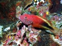 Diving Palau 01
