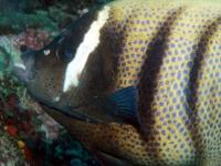 Diving Palau 03
