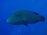 Diving Palau 04