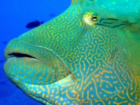 Diving Palau 05