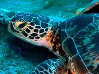 Diving Palau 06