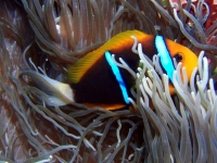 Diving Palau 07